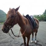 埼玉県の乗馬クラブの中級レッスン。(東京都府中市Sさん)