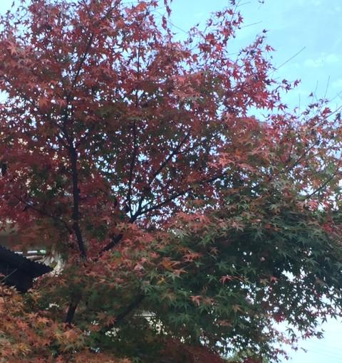 【中級障害レッスン】障害間3歩!(東京都新宿区区/I様)(埼玉県蕨市/A様)(東京都練馬区/S様)