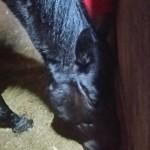 越生の乗馬クラブにて中級ドレッサージュレッスン[A2課目の経路練習]を行いました。(埼玉県川越市/K様)
