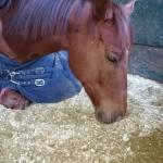 埼玉県の乗馬クラブ 馬の調整を行いました。