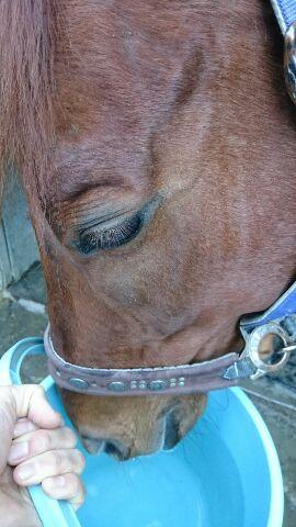 埼玉県の乗馬クラブ この時期の大好物