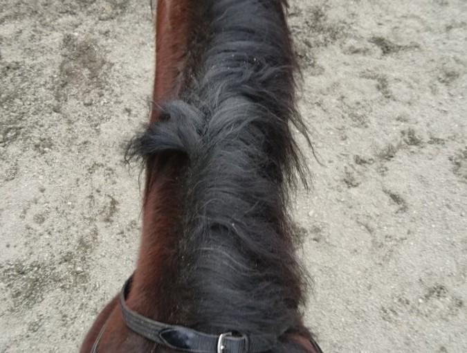 [越生の乗馬クラブ]馬の上からの目線です。