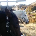 [越生の乗馬クラブ]ミドルレッスンにて駈歩維持の練習を行いました。(神奈川県横浜市/M様)