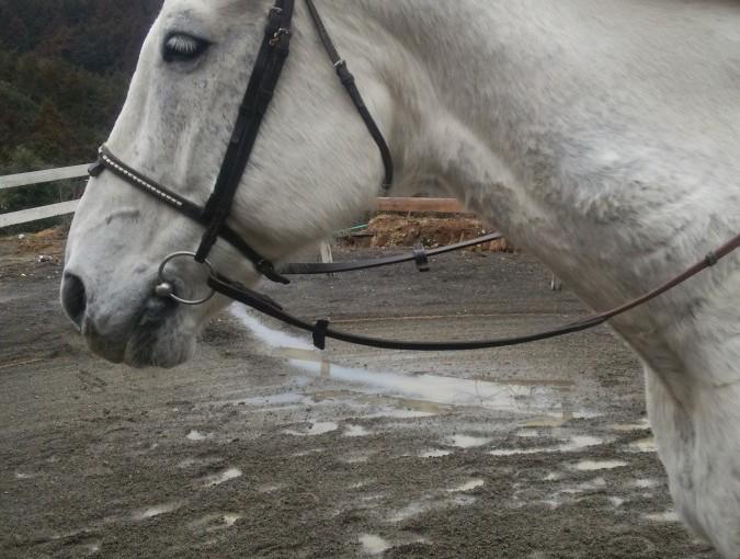 [越生の乗馬クラブ]親子3名で乗馬体験を行いました!!(埼玉県所沢市/I様)