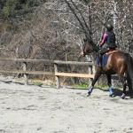 [越生の乗馬クラブ]経路走行会にて3級ライセンスの経路練習を行いました。[埼玉県富士見市/S様]