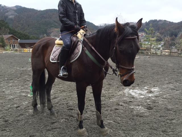 [越生の乗馬クラブ]3級練習しました!!(埼玉県さいたま市/I様)