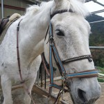 [越生の乗馬クラブ]ミドルレッスンにて駈歩維持の練習を行いました。(東京都世田谷区/S様)