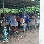 埼玉県の乗馬クラブ 洗濯しました。
