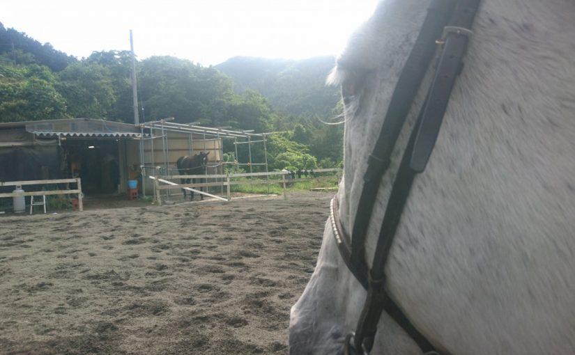 [越生の乗馬クラブ]そっと見守りたいと思います・・・(埼玉県川越市/A様)