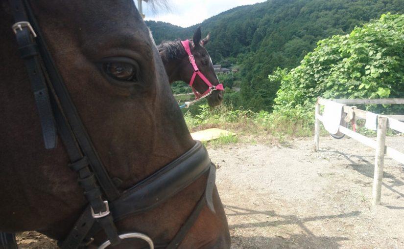 [越生の乗馬クラブ]初級JPレッスンにて2ポイントの練習を行いました。(東京都北区/K様)