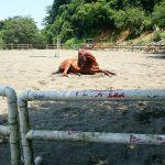 埼玉県の乗馬クラブ 競技に出場した馬を放牧しました。