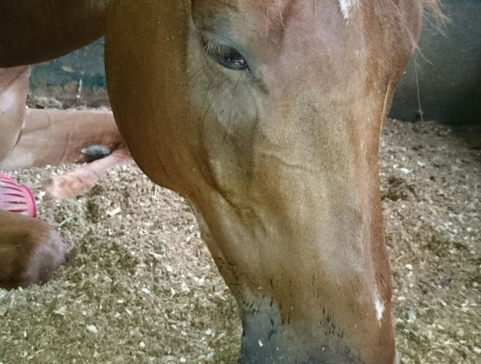 埼玉県の乗馬クラブ 雨なので、馬達は休んでいました。