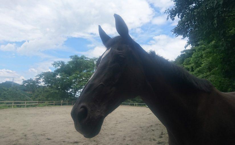[越生の乗馬クラブ]ミドルレッスンにて駈歩誘導の練習を行いました[神奈川県川崎市/T様]