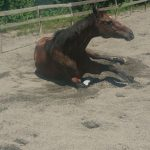 [越生の乗馬クラブ]ミドルレッスンにて3級経路の練習を行いました[埼玉県所沢市/I様]