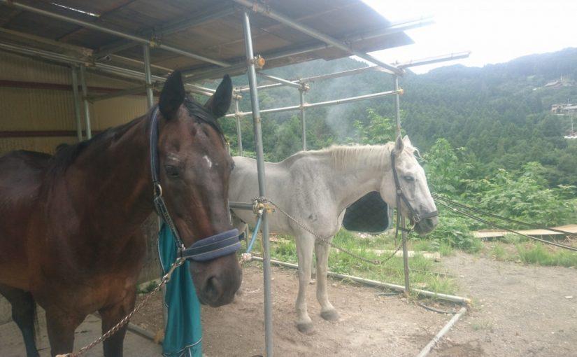 [越生の乗馬クラブ]ビギナーレッスンにて速歩誘導の練習を行いました[埼玉県熊谷市/A様]