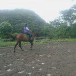 [越生の乗馬クラブ]ビギナーレッスンにて速歩維持の練習を行いました。[埼玉県さいたま市/A様]