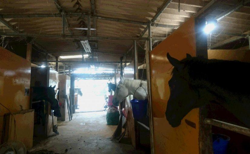 [越生の乗馬クラブ]ビギナーレッスンにて軽速歩で誘導の練習を行いました。[東京都江戸川区/N様]