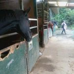 [越生の乗馬クラブ]3級ライセンスレッスンにて経路練習を行いました。[埼玉県富士見市/I様]