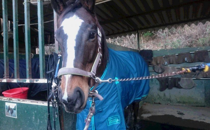 [越生の乗馬クラブ]新しい馬着です!!愛されてるなあ~[東京都新宿区/I様]
