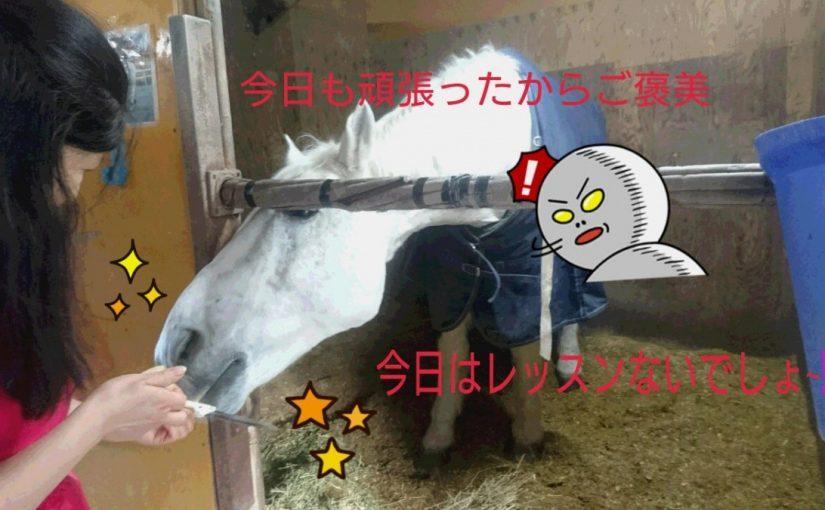 [越生の乗馬クラブ]おやつ貰ってるけど、今日レッスンしましたっけ~!?