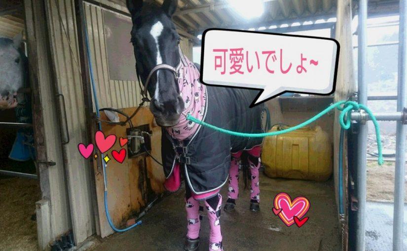 [越生の乗馬クラブ]ネックウォーマーとお揃いなの!!