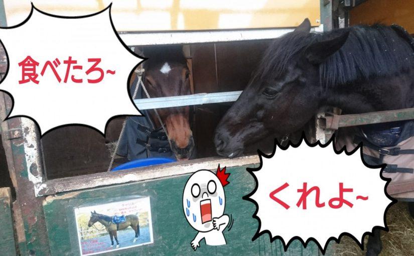 [越生の乗馬クラブ]ちょうだ~い!!もう食べ終わったろ~