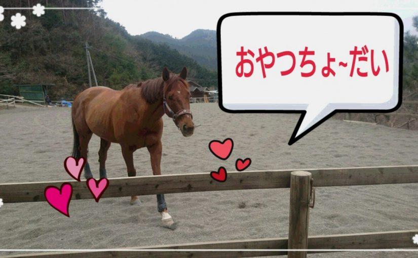 [越生の乗馬クラブ]おやつ持ってるの~!?