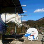 [越生の乗馬クラブ]いい天気ですね~!寝てます!?