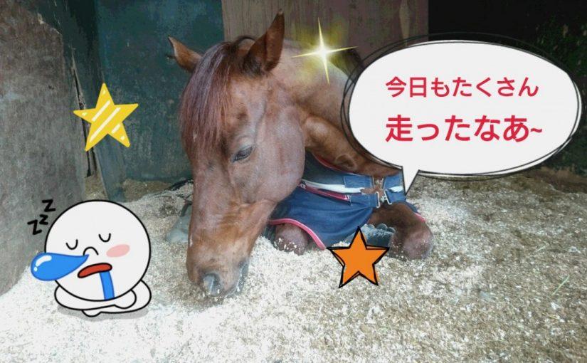[越生の乗馬クラブ]もうすでに夢の中・・・