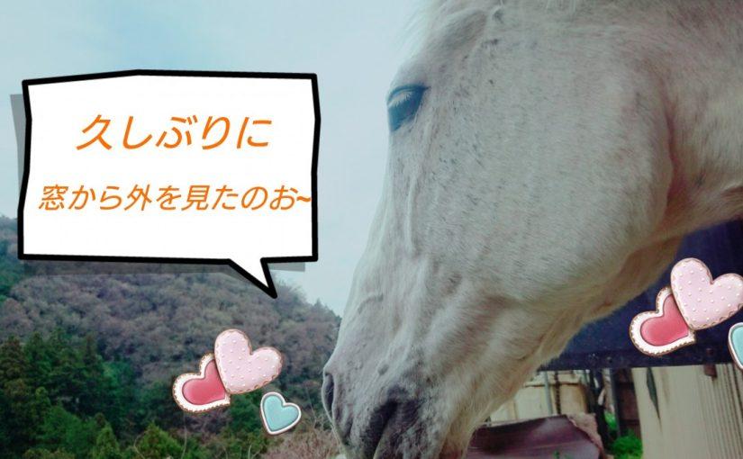 [越生の乗馬クラブ]やっぱりここからの景色は最高だな~!!