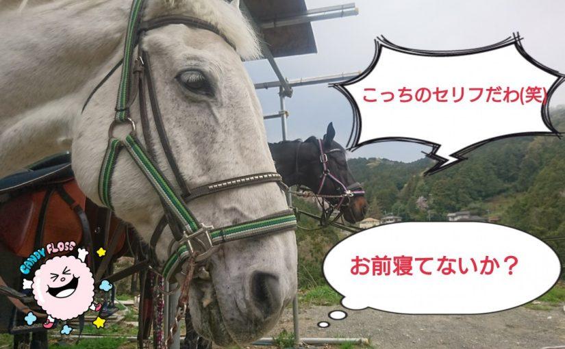 [越生の乗馬クラブ]春らしいいい天気の中ジェイド君は・・・!?