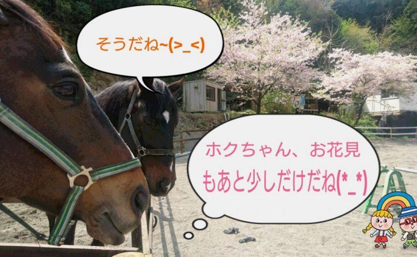[越生の乗馬クラブ]お花見ももう少しでおしまいかな!?