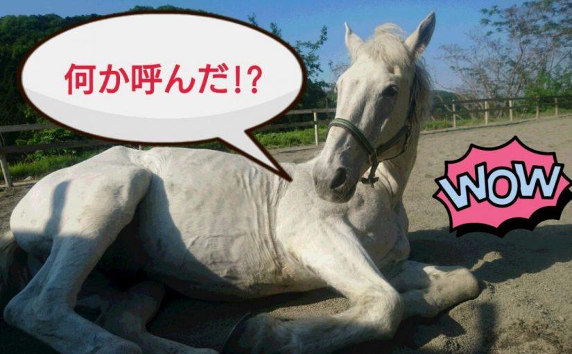 [越生の乗馬クラブ]頑張ったご褒美で砂浴びじゃ~