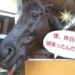 [越生の乗馬クラブ]3頭無事に帰ってきましたよ~