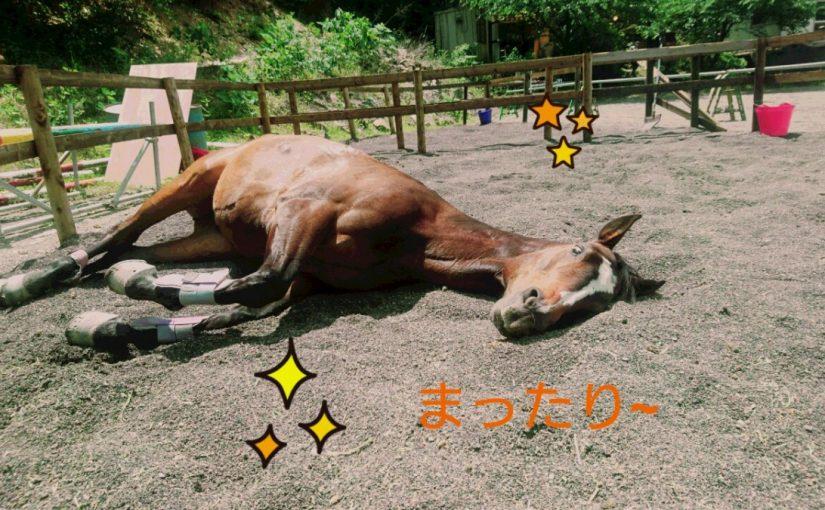 [越生の乗馬クラブ]今日は比較的のんびり~