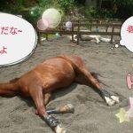 [越生の乗馬クラブ]2頭とも熟睡は珍しくないですか!?