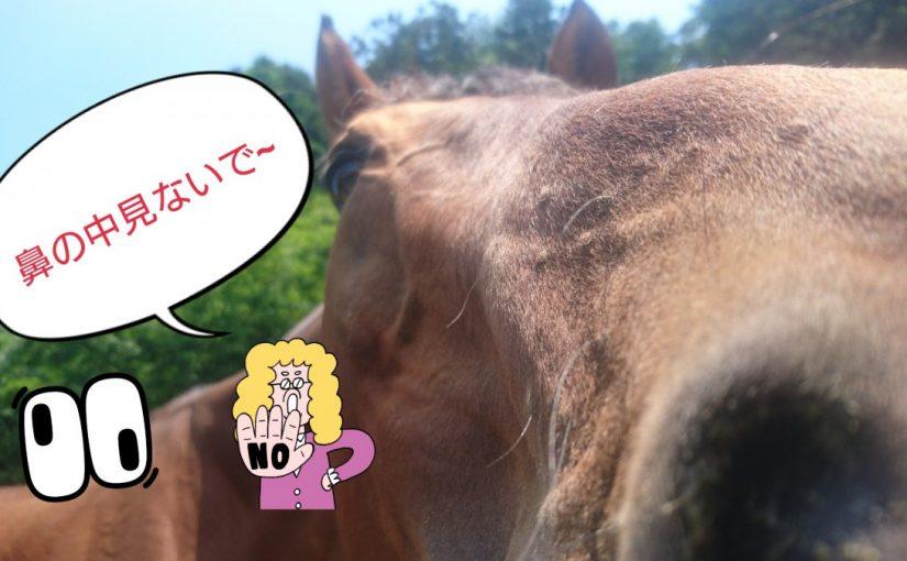 [越生の乗馬クラブ]鼻の中は見ないで~!!