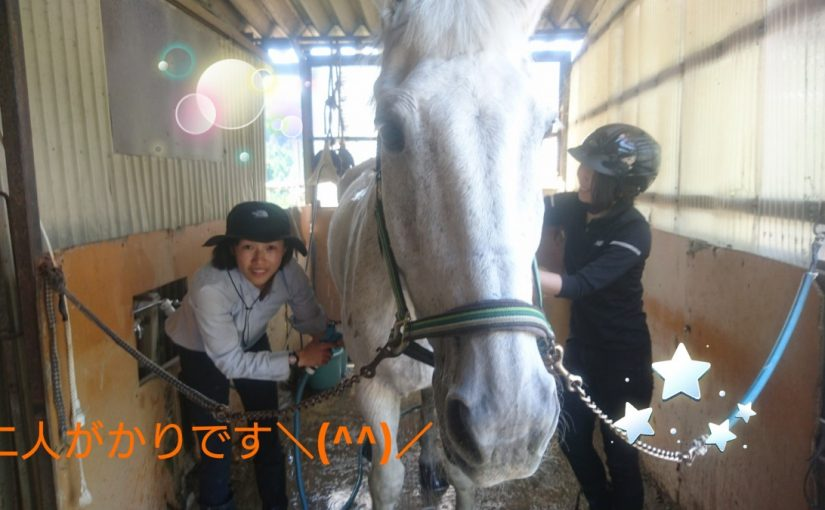 [越生の乗馬クラブ]葦毛用シャンプーでピカピカです!!