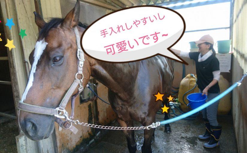 [越生の乗馬クラブ]この子が好きなんです~