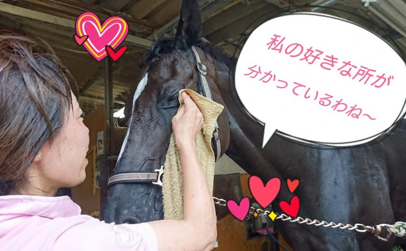 [越生の乗馬クラブ]汗を綺麗に落としてくれてありがとう~!!