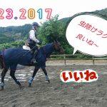 [越生の乗馬クラブ]虫除けラグは違うね~!!