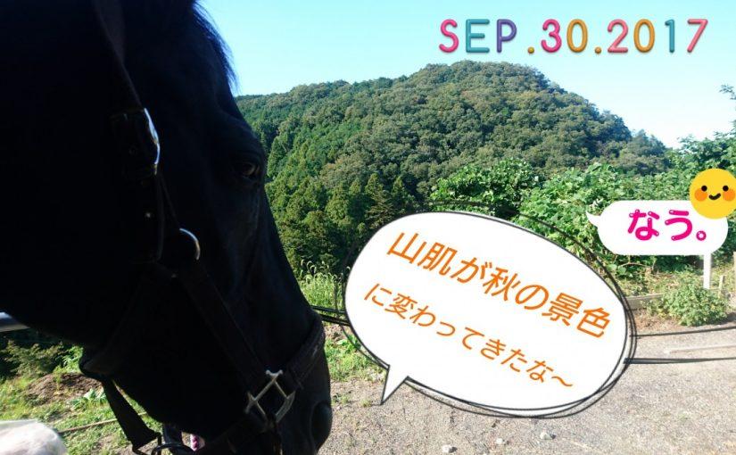 [越生の乗馬クラブ]すっかり秋の景色になりましたね~
