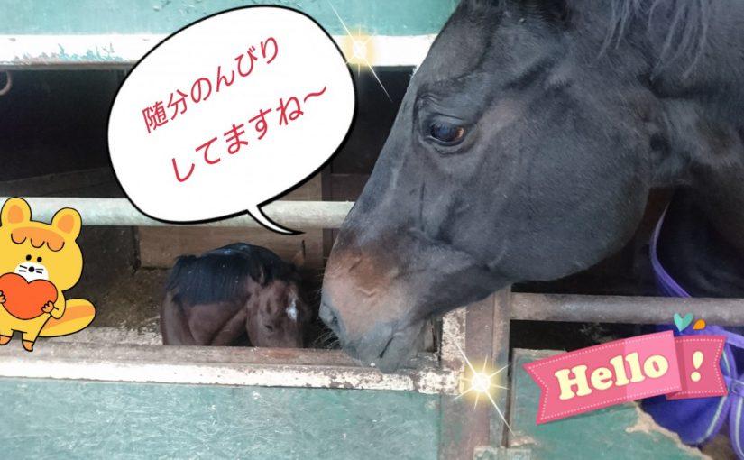 [越生の乗馬クラブ]新しいオガは良いね~
