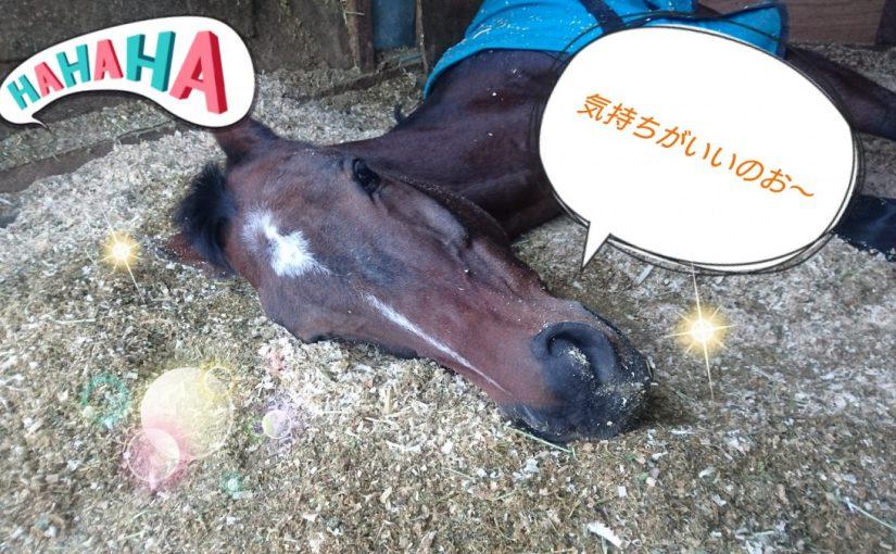 [越生の乗馬クラブ]寝るには最高の季節じゃ~