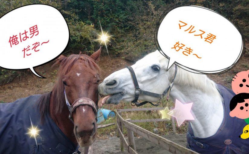 [越生の乗馬クラブ]お互い頑張っていこうぜ~!!