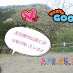 [越生の乗馬クラブ]山桜が咲いていますよ~