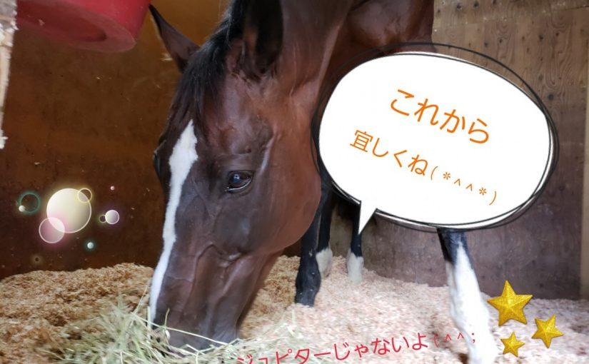 [越生の乗馬クラブ] 新しい馬がやってきました~